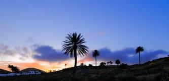haria Lanzarote palmowi sylwetek drzewa Zdjęcie Stock