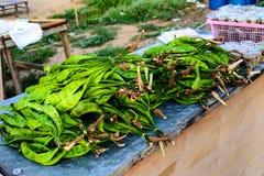 Haricot amer de Thaïlande du sud Images stock