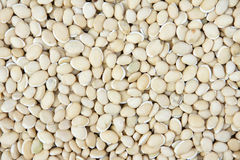 Haricot bean Royalty Free Stock Photography