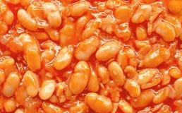 Haricot bean Stock Image