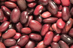 Haricot. Bean close background with high resolution Royalty Free Stock Photography