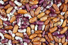 Haricot bean close background with high resolution. Colored haricot beans closeup on a background, top view, beans background Royalty Free Stock Images