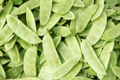 Haricot bean pods. The background of fresh haricot bean pods Royalty Free Stock Photography