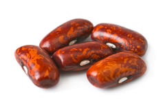 Haricot beans Stock Image