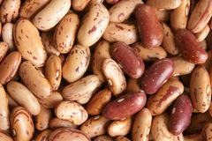 Haricot beans. Macro texture background Stock Photo