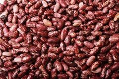 Free Haricot Beans Stock Photos - 3987773