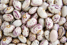 Haricot beans. Texture royalty free stock photos