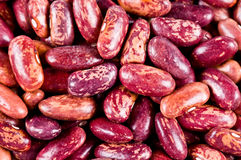 Haricot beans Royalty Free Stock Photography