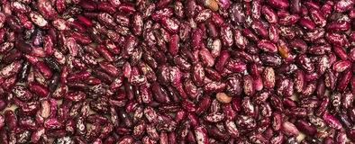 Haricot beans Stock Images