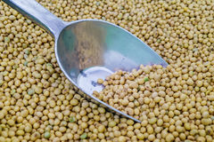 Haricot de soja avec le scoop argenté Images libres de droits