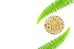 Haricot de soja dans la cuvette blanche avec la plante verte d'isolement sur le blanc photographie stock