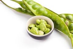 Haricot de speciosa de Parkia ou haricot amer sur le fond blanc Photo libre de droits