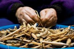 Haricot fasole susi strąki Fotografia Stock