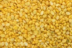 Haricot jaune Photos stock