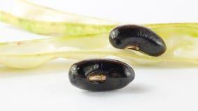 Haricot noir frais Photo stock