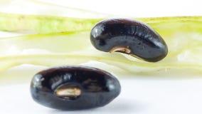 Haricot noir frais Image stock