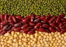 Haricot vert, haricots de soja et fond de haricot rouge Différents types o Photographie stock libre de droits