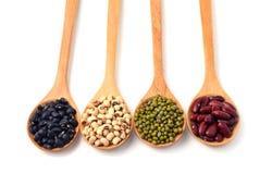 Haricot vert svarta bönor, röda bönor i träskeden, vit backg royaltyfri fotografi