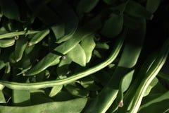Haricot w strąkach Fasola dla gotować Zdjęcie Stock