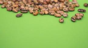 Haricots arrosés sur un fond vert Photo libre de droits