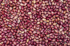 Haricots chinés Image stock