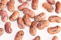 Haricots colorés Photo libre de droits