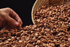 Haricots crus de cacao Images libres de droits