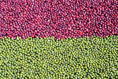 Haricots d'adzuki rouges mélangés et fèves de mung vertes Photographie stock libre de droits