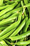 Haricots d'asperge Images stock