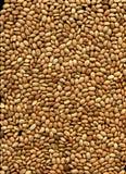 Haricots de Brown Pinto image stock
