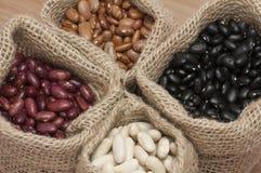 Haricots de haricot blanc et nains, haricots de pinto et haricots noirs Photographie stock libre de droits
