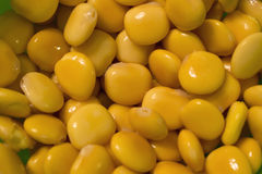 Haricots de Lupini Images stock