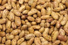 Haricots de Pinto photo libre de droits