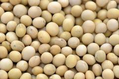 Haricots de soja Photos stock
