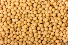 Haricots de soja Image stock