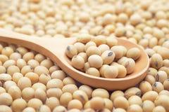 Haricots de soja Photos libres de droits