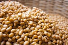 Haricots de soja images stock