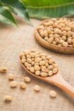 Haricots de soja sur la cuillère en bois Image libre de droits