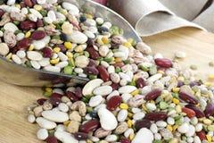 Haricots et lentilles dans l'épuisette - horozontal Image libre de droits