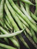 Haricots frais Photo stock