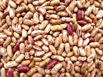 Haricots nains Image libre de droits