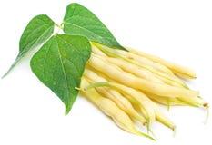 Haricots nains jaunes Photos libres de droits