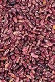 Haricots nains rouges photographie stock libre de droits