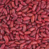 Haricots nains rouges Photographie stock libre de droits
