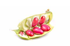 Haricots nains rouges photographie stock