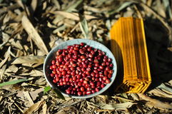 Haricots rouges photographie stock