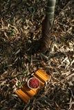 Haricots rouges photographie stock libre de droits