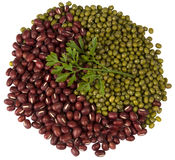 Haricots rouges et verts avec un brin d'aneth Image stock