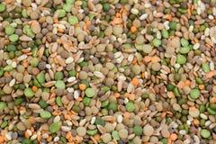 Haricots secs mélangés Images stock