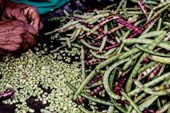 haricots verts étant photo libre de droits
